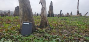 A film holder placed against a dead cypress trunk in the Drowned Forest.