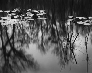 Gore's Landing, Ocklawaha River, 2020.