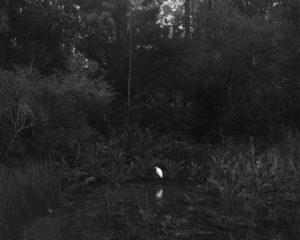 Egret at Fort Mose 02, 2019.