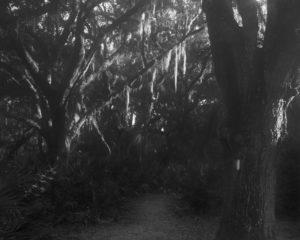 Hickory Hammock, Florida Trail, 2019.