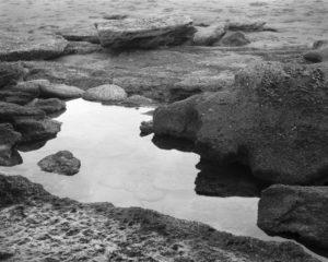 Tide Pool, River to Sea Preserve, Florida. 2020.